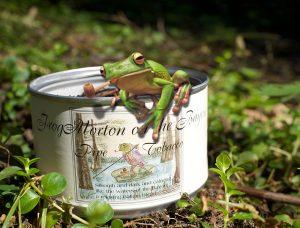 Frog Morton on the Bayou