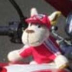 Profilbild von Steffen